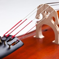 Cello Bridge